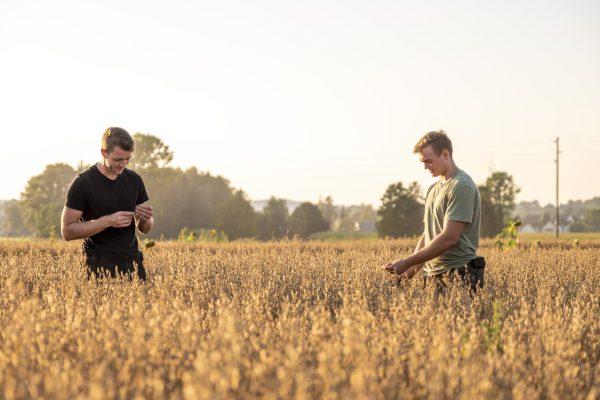 Bauernmarkt Dasing Bio-Haferflocken